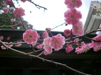 町田天満宮5.JPG