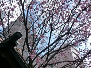 蔵前神社3.JPG
