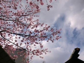 蔵前神社4.JPG