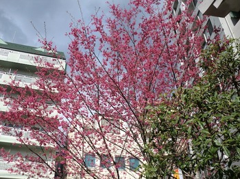 蔵前神社5.JPG